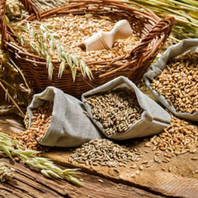 As an integral component of plant cells, insoluble fiber is one of the oldest nutritive and structural components.