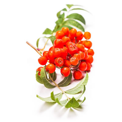 Sorbic acid is a food preservative which originated from rowan tree berries.