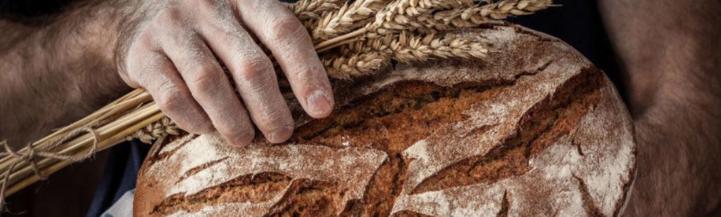 whole grain bread nutrition whole grains healthy bread