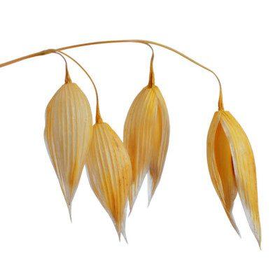 oat fiber - oats -fiber