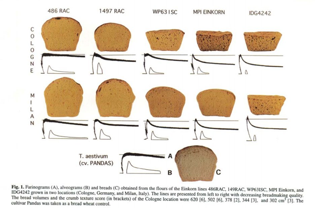 he quality of einkorn wheat varieties.