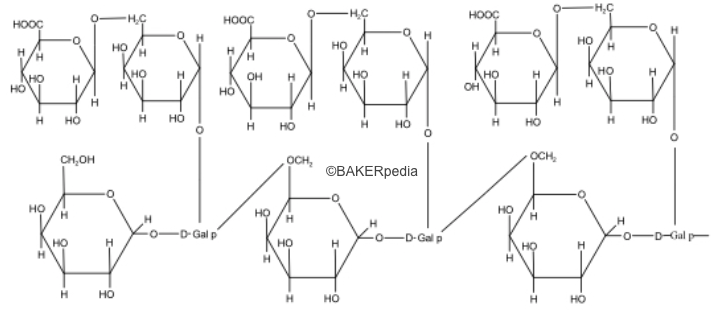 Chemical structure of Acacia Gum.