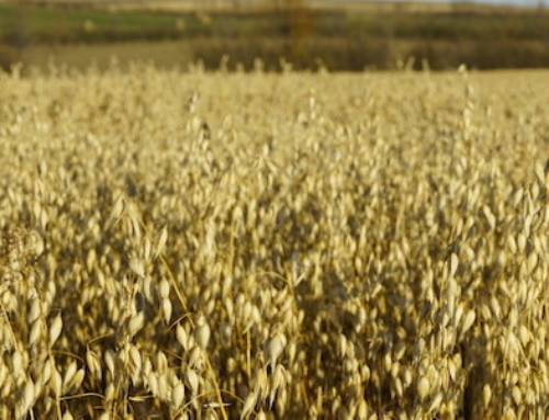 New Definition of Dietary Fiber Opens Possibilities for Oat Hull Fiber