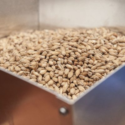 Malting is an enzymatic process for germinating grains and allowing them to sprout.
