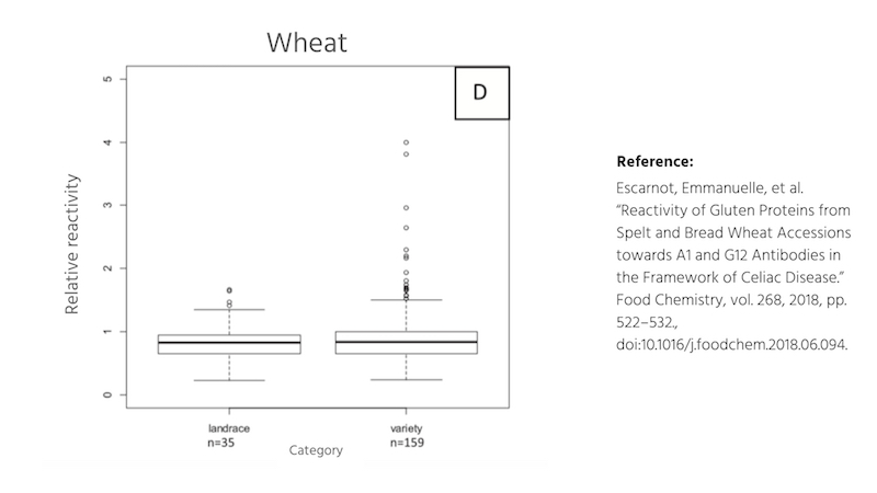 Gluten proteins in ancient and modern wheat.