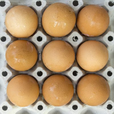 An eggs spec sheet for the production of bakery products is a document that expresses and defines the requirements that must be met by egg suppliers in order to comply with bakeries' ingredient quality specifications and processing conditions.