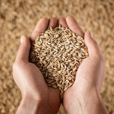 Grain traceability means the ability to identify at any specified stage of the grain supply chain from farmer to consumer where the food products come from.
