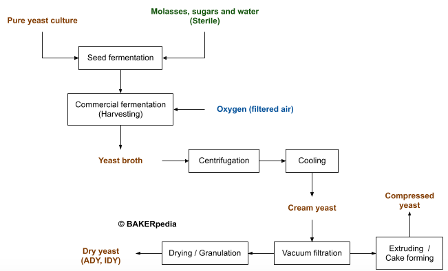Block diagram for the production of Baker's yeast