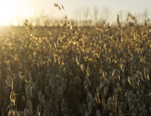Benefits of Oat Fiber in Baking and on the Label