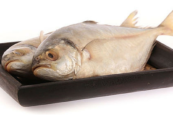 Fish Allergy Food Safety Bakerpedia